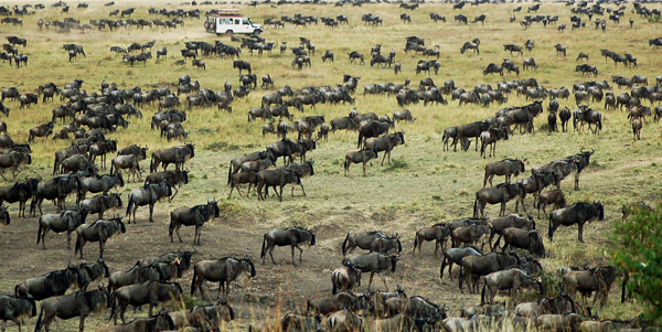 Have I Got Gnus For You! By Lance Harcourt