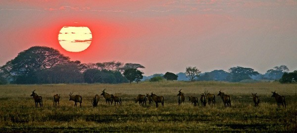 Wild Zambia Safari Special – 7 nights/8 days in Zambia's most remote locations