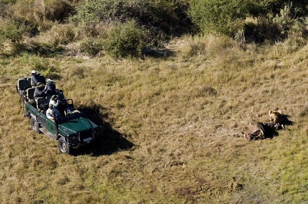 On a game drive at Duba Plains