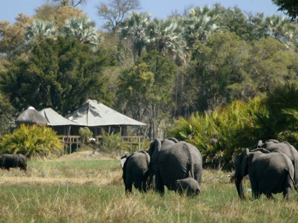 Elephants walks past Little Mombo
