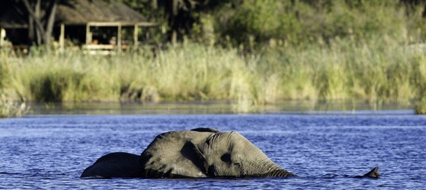 Classic Botswana & Zambia Summer Safari – 8 nights – US$3910
