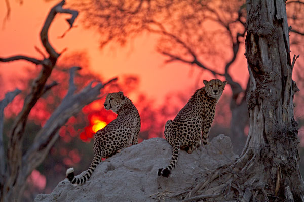 Botswana Highlights Special  – 8 Nights from US$3715 per person