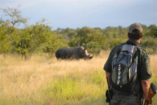 Walking Safaris in the Kruger Private Reserves – by Brett Thomson