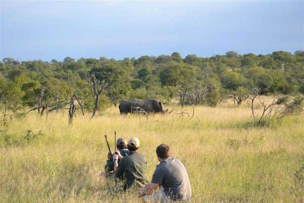 Tracking rhino on foot in the Kruger Private Reserves