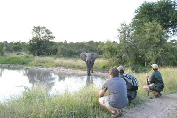 Quietly observing an elephant quench its thirst on a walking safari at Africa on Foot