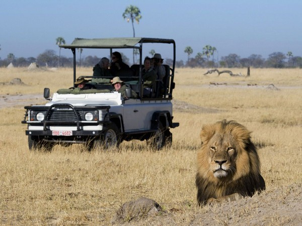 """No such thing as """"Sustainable Lion Hunting"""" – by Brett Thomson"""
