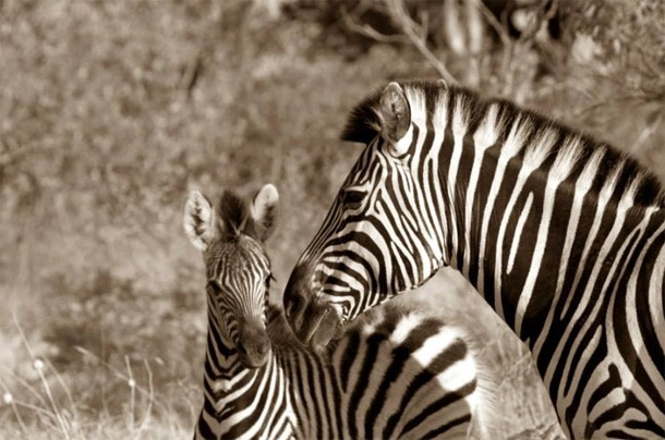 Our Team Travels: Natasha's Botswana Safari review