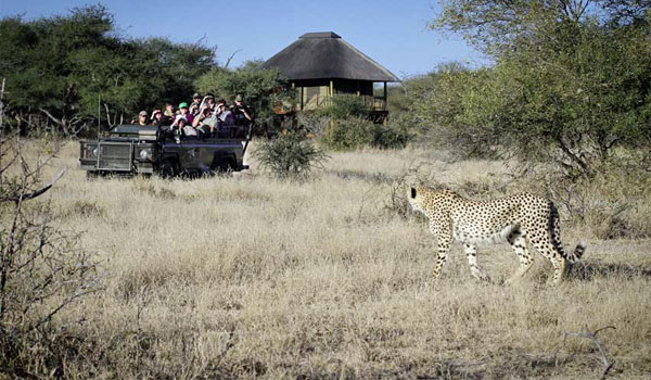 A delightful safari experience in the Kruger – Client feedback by Natasha Allan