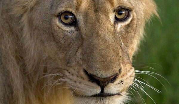 A warm welcomed trip in Cape Town and Kruger – Guest feedback by Liselle Raath