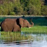 Best Botswana Camps – guest feedback by Anne-Marie Mulder