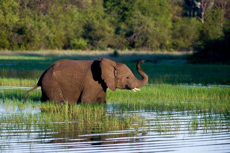 Wilderness-safaris-ele-in-water