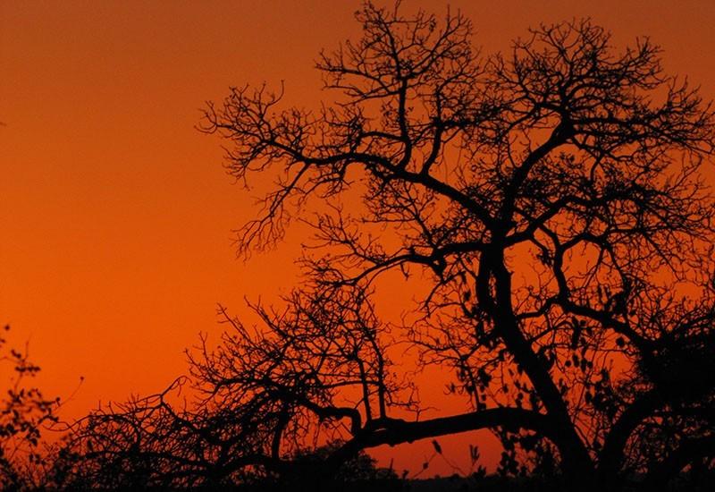 Safari at nDzuti, Five reasons to book a Kruger safari at nDzuti