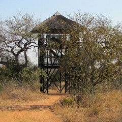 My magical night in a Kruger treehouse