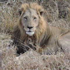 A Wonderful Southern Africa Itinerary – Client Feedback