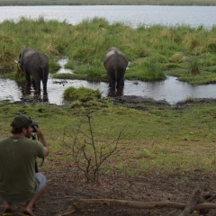 Fancy a Photographic Safari?