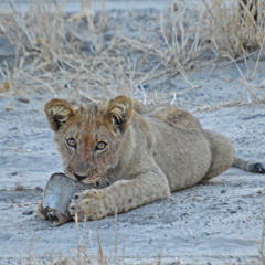 It's Baby Season in Botswana!