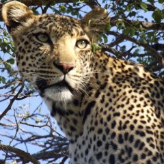 Our Team Travels: My Kruger Safari – Michelle Astbury