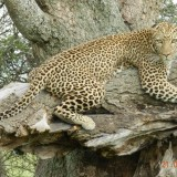 Kruger and Tanzania Safari – a Feast for the eyes! Client feedback