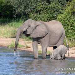 Kruger's Klaserie vs Botswana's Okavango Delta – In Pictures