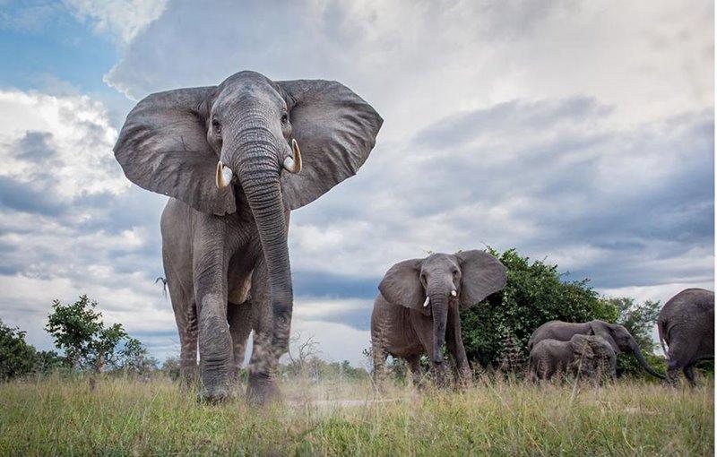 Week on the Wildside – A Safari in South Luangwa