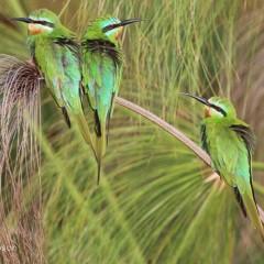 Botswana Photographic Safari – Client Feedback