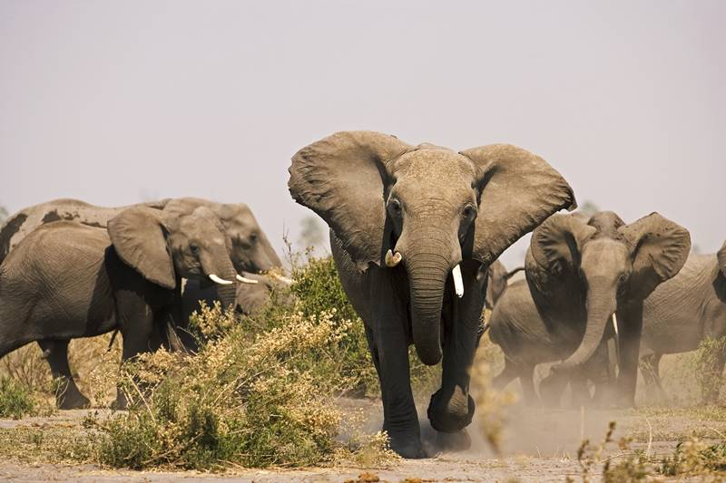 Enjoy free transfer flights between camps when you visit Botswana or Kenya with Great Plains Conservation