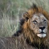 nThambo and Kambaku safari – Client Feedback