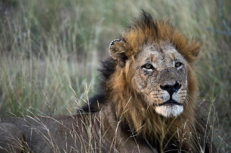 sunsafaris-13-client-feedback-nthambo-kambaku