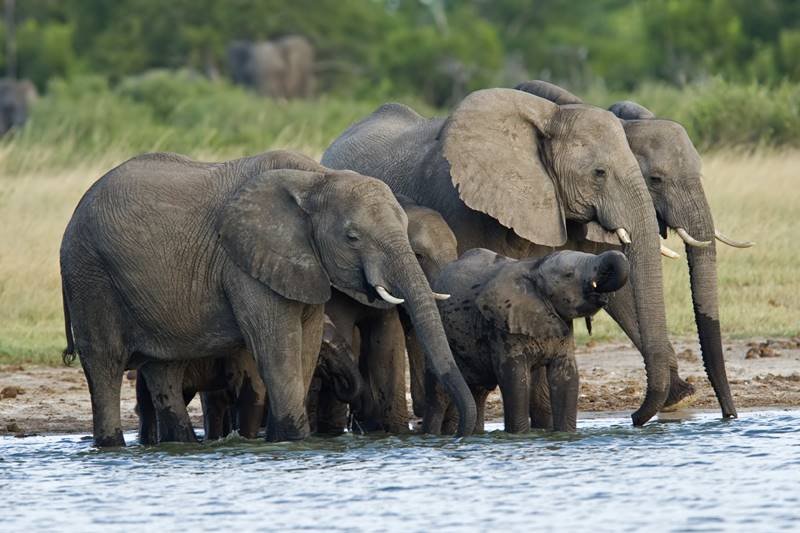 A Southern Africa safari