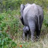 Kruger Holiday Safari
