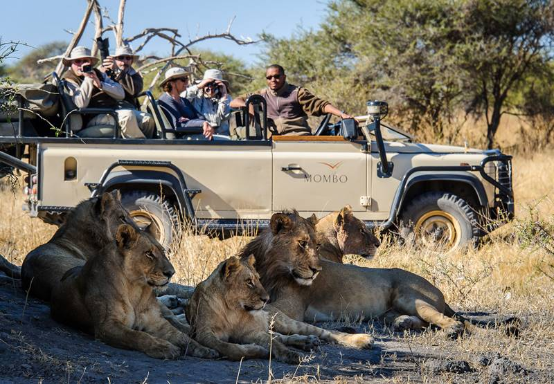 Fabulous Experience on Safari