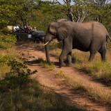 Perfect Kruger Safari – Client Feedback