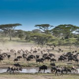 Amazing Vacation in Africa – client feedback