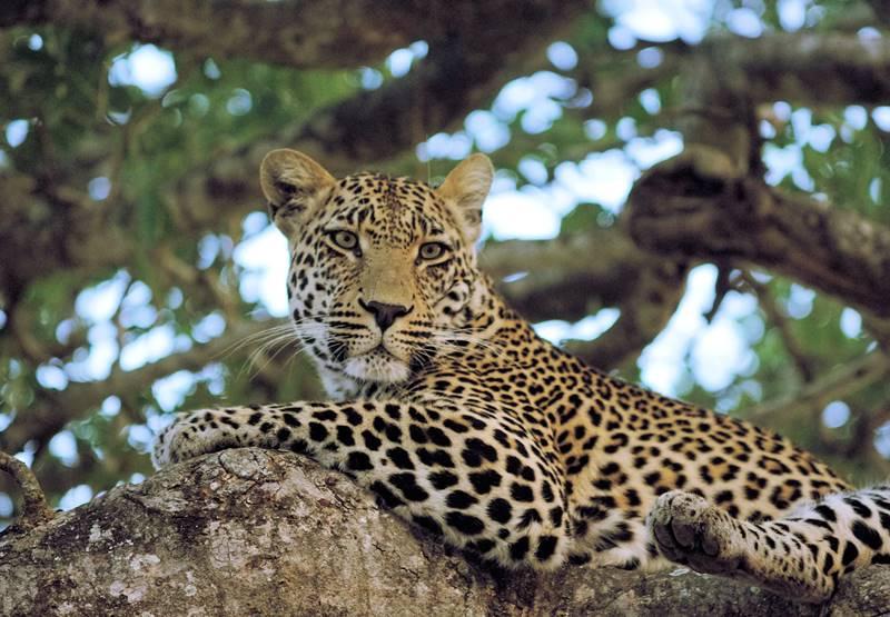 Sun Safaris 1 wonderful Kruger safari
