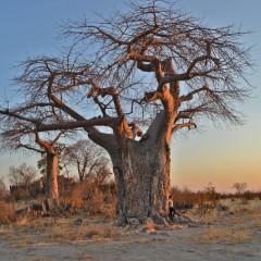 Botswana Safari at the Charming Ghoha Hills Savuti Lodge