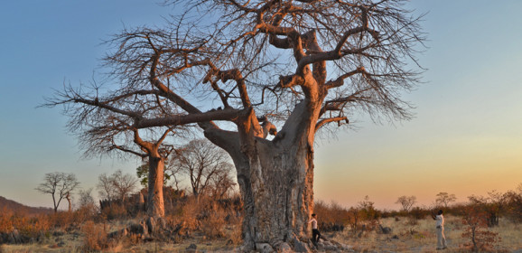 Botswana Safari at the Charming Ghoha Hills Savuti Lodge