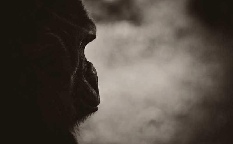Gorilla Trekking  - Iconic Images of Africa