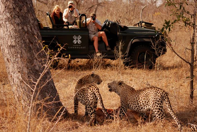 Sun-Safaris-Review-5-Londolozi-is-a-perfect-safari