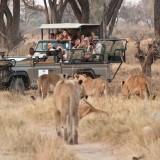 Lovely Botswana Safari Circuit – Client Feedback