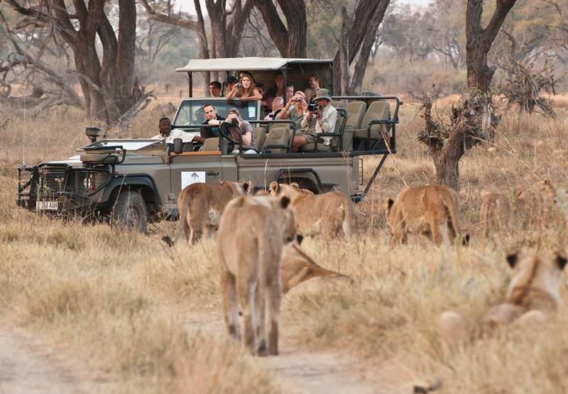 Machaba Camp - Game drive