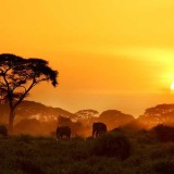 Why We Love These 15 Iconic Images of Africa