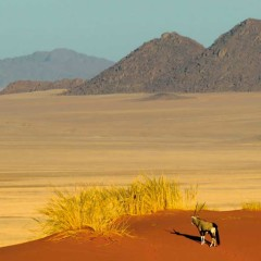 Top 5 Most Exquisite Lodges in Namibia