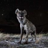 Hyena Hatred : Why Do People Detest Hyenas?