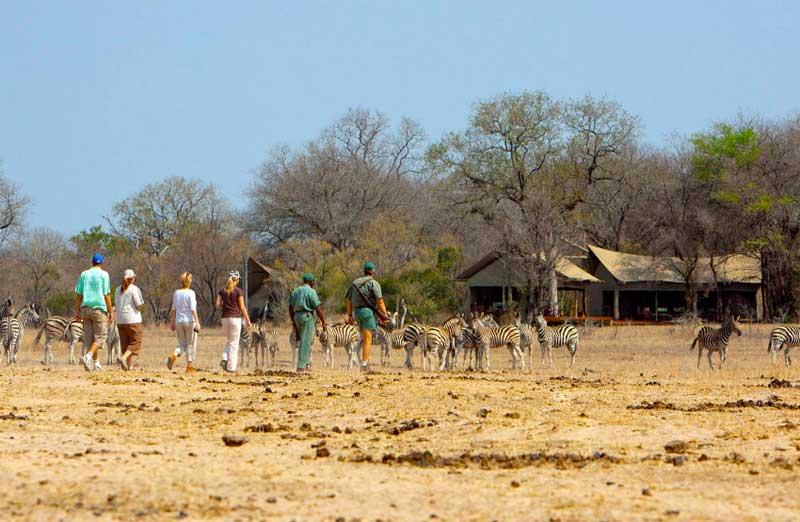 Rhino Post Walking Safari