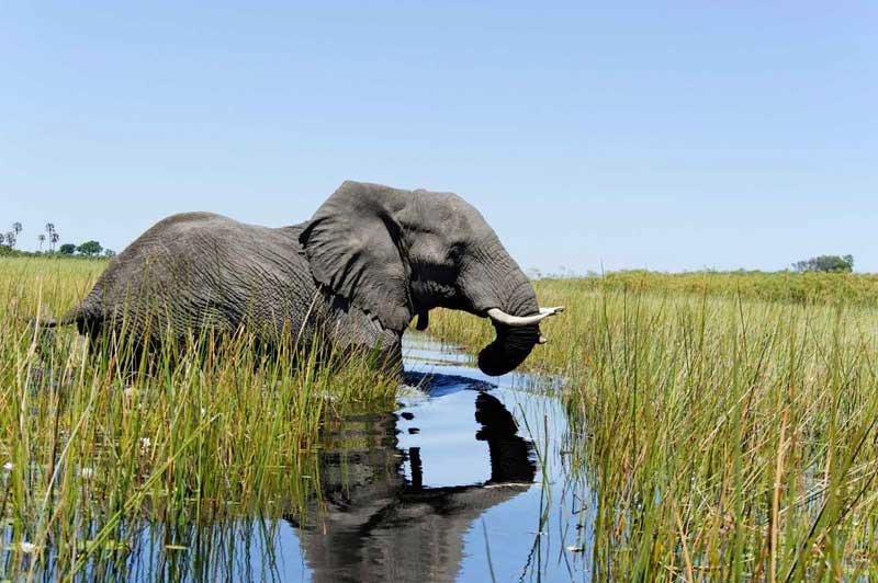 Afrika Ecco Okavango Delta