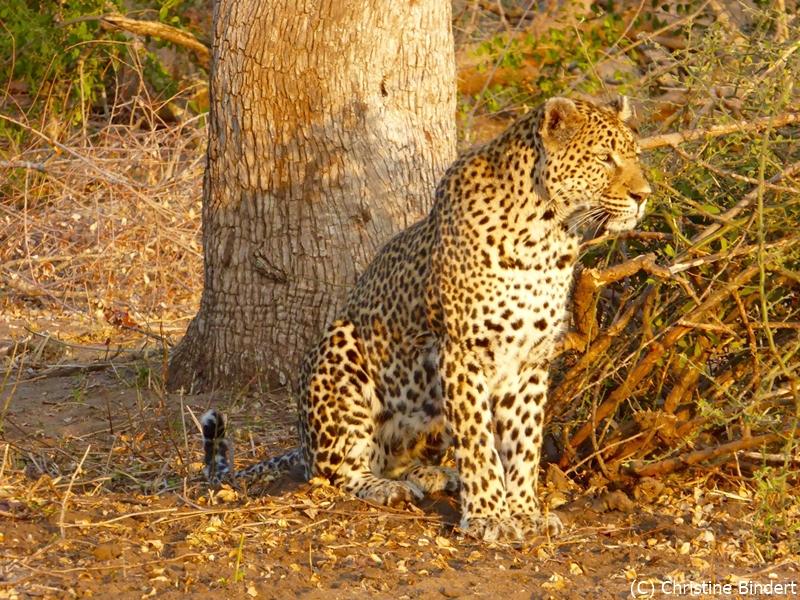 Mala Mala and Mashatu Safari – Client Feedback