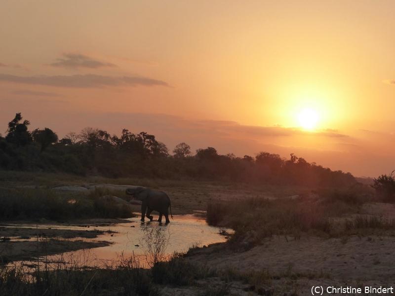SunSafaris-016-mala-mala-mashatu-safari