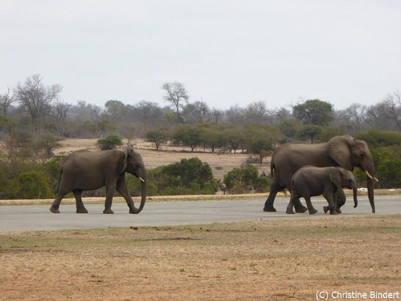 SunSafaris-018-mala-mala-mashatu-safari