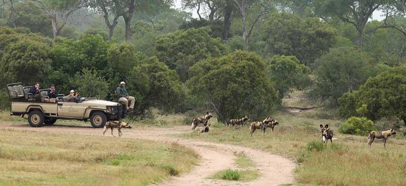 Arathusa Wild Dogs Safari