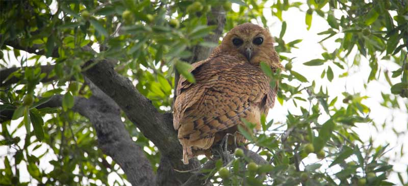 3 Incredible Birds to Spot While on Safari